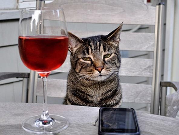de cat drunk popular