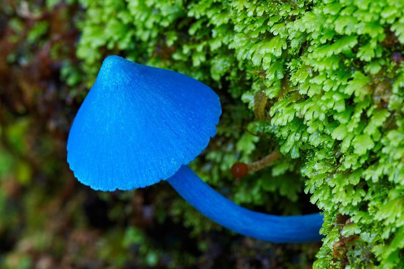 Top 10 Most Amazing Mushrooms