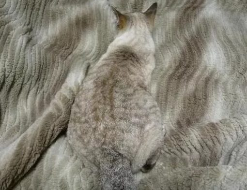 Cat Camouflaged as a Fleece