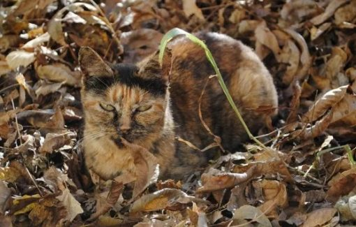 Cat Camouflaged as Leaves
