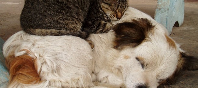 Top 10 Best Images of Cats on Dogs