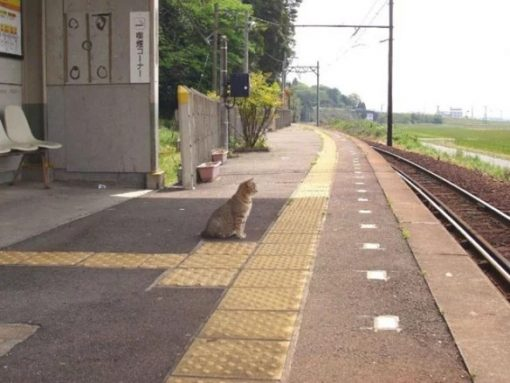 Cat waiting for the train