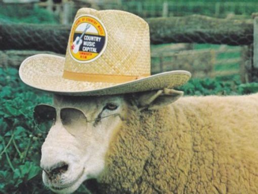 Sheep in hat and glasses