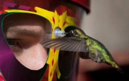 Hummingbird Feeder That You Wear