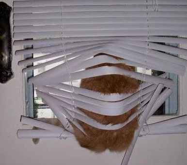 Cat looking out of a window sat on the blinds