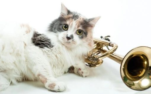 Cat playing trumpet
