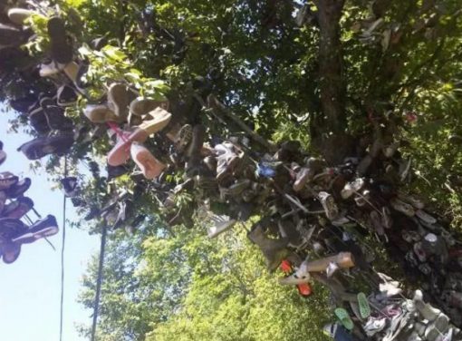 Shoe Tossing: Hundreds of Shoes on a Tree