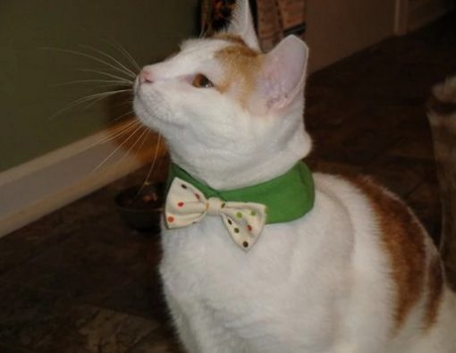 Cat Wearing a Green and Spotted Bow Tie