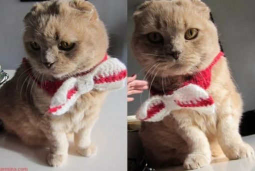 Cat Wearing a Knitted Bow Tie