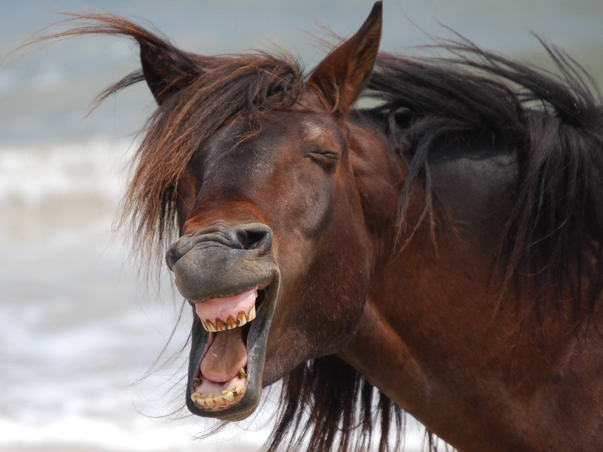 Top 10 Images of Laughing Horses