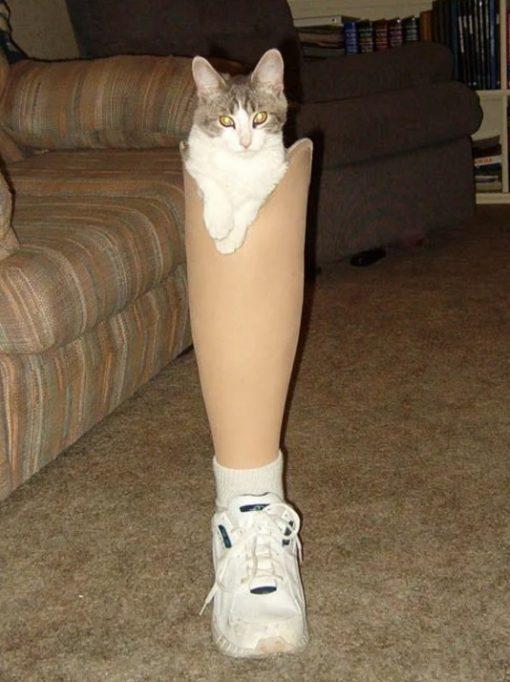 Cat Disguised as a false leg