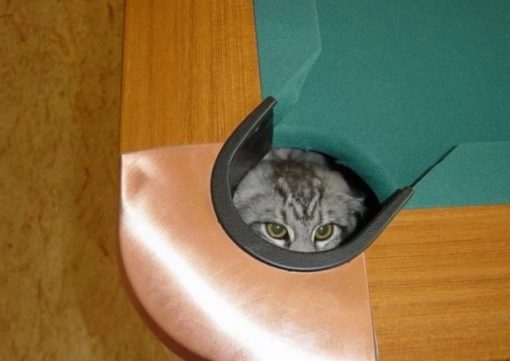 Cat Disguised as a pool ball