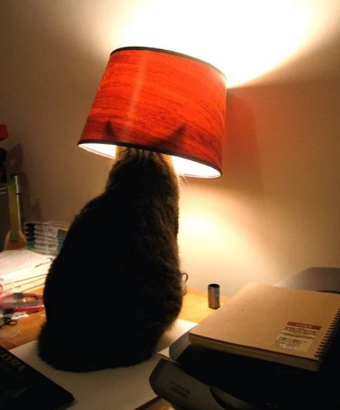 Cat Disguised as a Lamp