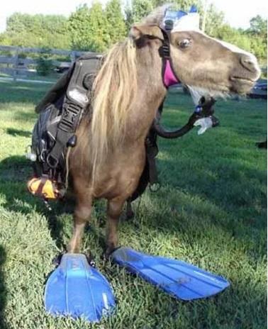 This Sea Horse Seems Legit!