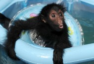 Top 10 Funny Images of Animals in Paddling Pools