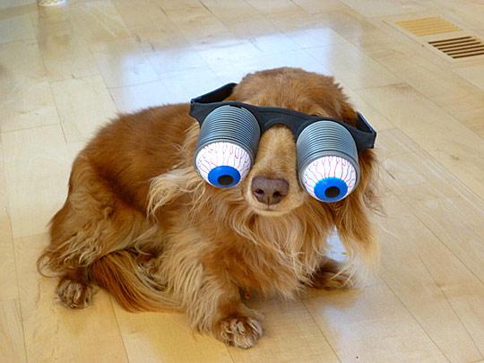 Dogs Wearing Googly Eyes