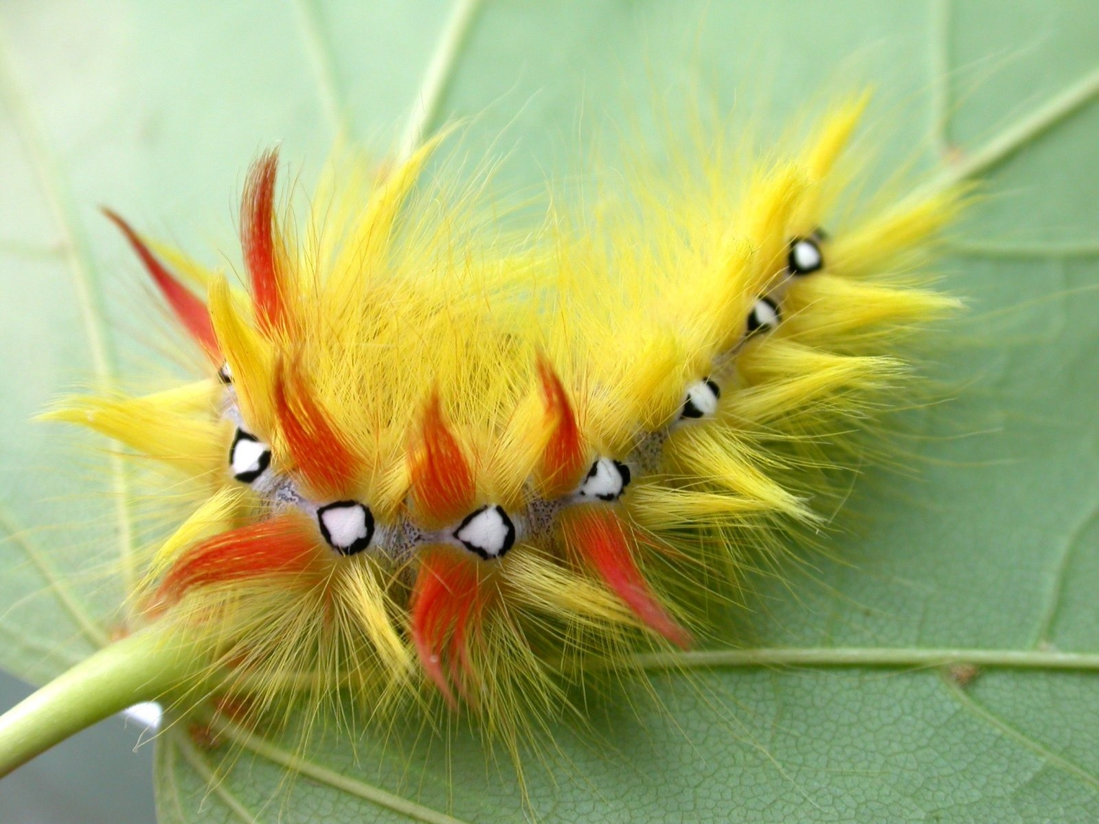 Top 10 Unusual And Amazing Caterpillars