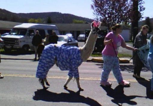 llama in pajamas