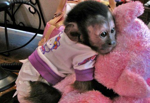 Monkey in Pajamas