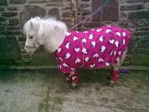 Horse in Pajamas