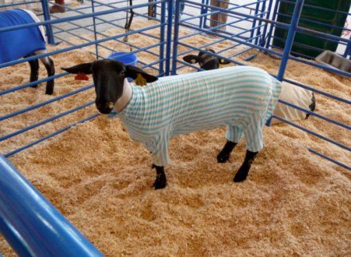 Sheep in Pajamas