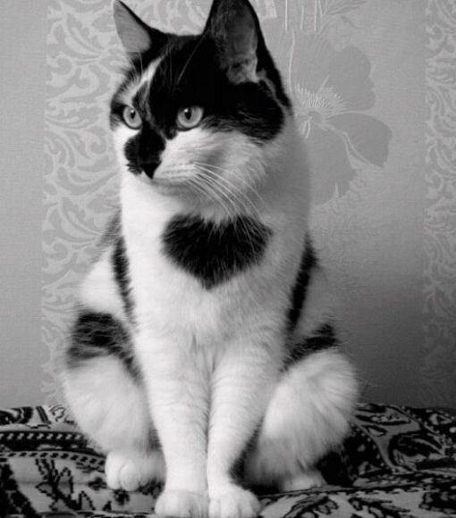 Cat with heart-shaped fur