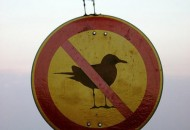 Top 10 Images of Animals Disobeying Signs