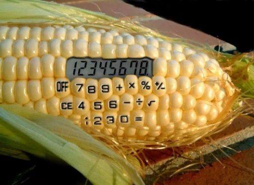 Calculator shaped like a corn cob