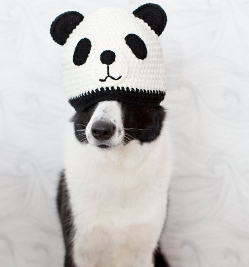 Top 10 Weird and Amazing Panda Dogs