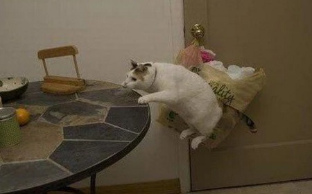 Cat Playing With Invisible Chair
