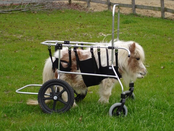 Where Can I Buy A Dog Wheelchair
