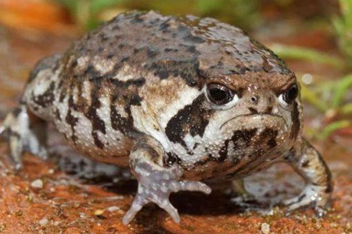 Grumpy Looking Toad