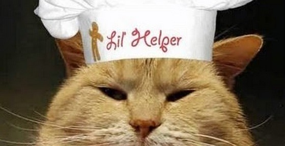 Top 10 Images of Celebrity Chef Cats Cooking
