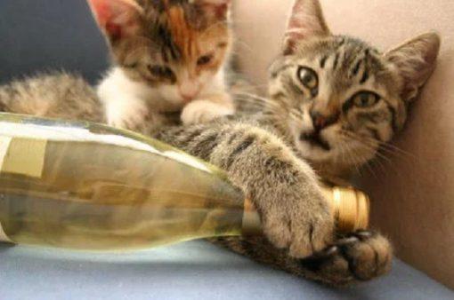 Cats Drinking Wine