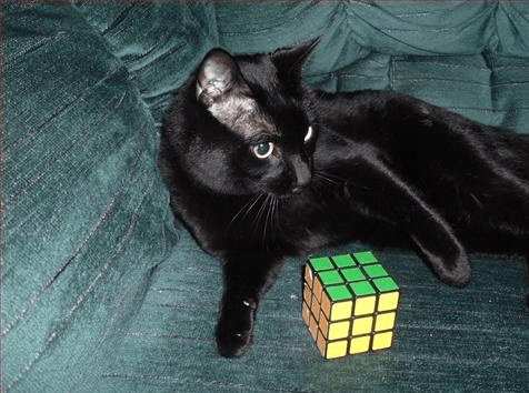 Cat Playing With Rubiks Cube