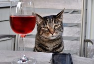 Top 10 Images of Cats Drinking Wine