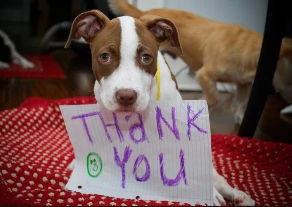 Top-10-Images-of-Dogs-Saying-Thank-You-7
