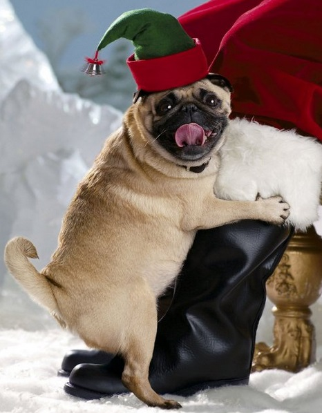 Top 10 funny festive dogs in elf costumes for What are the best dogs in the world