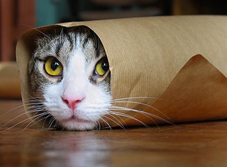 Top 10 funniest images of gift wrapped cats negle Images