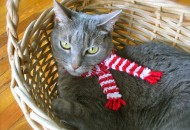 Top 10 Funny Images of Cats Wearing Scarves