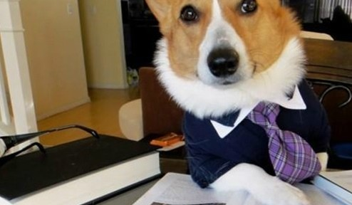 Top 10 Civil Woofigation Dog Lawyers