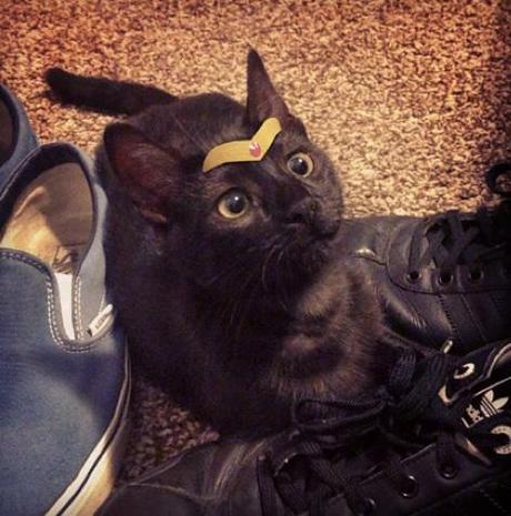 Superhero Cat Inspired By Wonder Woman