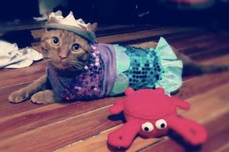 Mermaid Cat