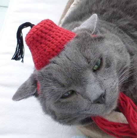 Cat Wearing a Fez