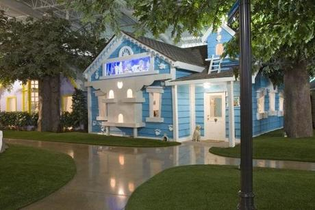 Pets House Themed Office in Inventionland