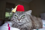 Top 10 Cats Wearing a Fez