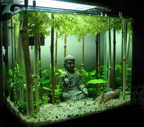 Top 10 amazing and unusual themed fish tanks for Tall fish tank decorations