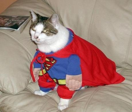 Cat in a Superman Costume