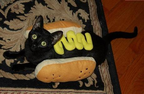 Cat Dressed as Hot-Dog