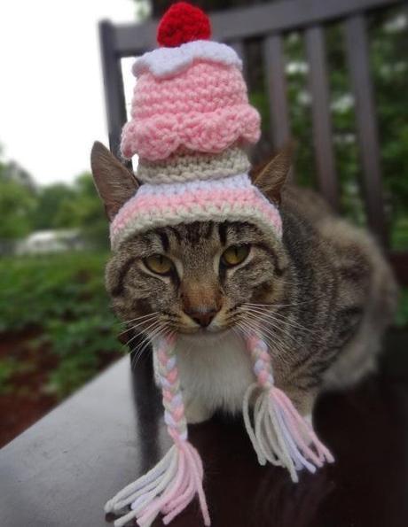 Cat Dressed as Cupcake
